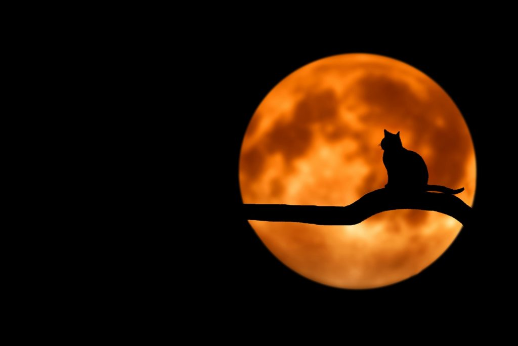 America in Danger: Witches Outnumber Presbyterians in the US – Wicca, Paganism, New Age Movement Growing Astronomically